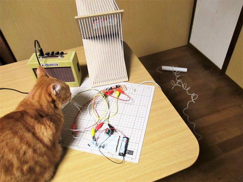 1石・トラ検 バラック・ラジオと猫